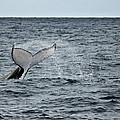 Whale Of A Time by Miroslava Jurcik