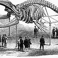 Whale Skeleton, 1866 by Granger