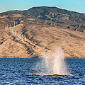 Whale Spout by Trever Miller