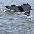 Whale Tail by Bob Hislop