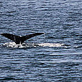 Whale Tail by Dillen Erb