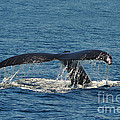 Whale Tail by Randi Grace Nilsberg