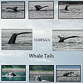 Whale Tails by Robert Bales