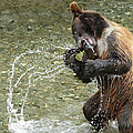 What A Show Little Bear by Ursula Salzmann
