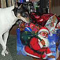 What Did Santa Bring Me by Barbara McDevitt