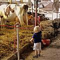 Hi Cows Or What The County Fair Is All About by Kathy Barney