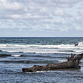 What The Sea Brought Back by Belinda Greb