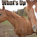 What's Up by Aimee L Maher ALM GALLERY