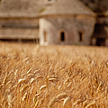 Wheat At The Abbaye by Brian Jannsen