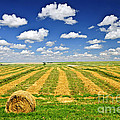 Wheat Farm Field And Hay Bales At Harvest In Saskatchewan by Elena Elisseeva