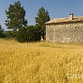 Wheat Field, France by John Shaw