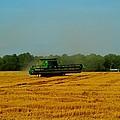 Wheat Field by Rebecca Frank