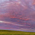 Wheat Field Sunset Panorama by Andrea Goodrich