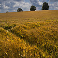 Wheat Fields by Debra and Dave Vanderlaan
