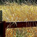 Wheat N' Fence by Annie  DeMilo