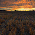Wheat Stubble Sunset by Mike  Dawson