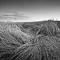 Wheat Waves by Milan Gonda