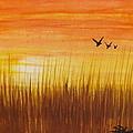 Wheatfield At Sunset by Darren Robinson