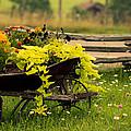 Wheel Barrow Of Flowers by Shane Holsclaw