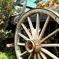 Wheels And Blooms by Glenn McCarthy Art and Photography