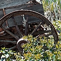 Wheels In The Garden by Glenn McCarthy Art and Photography