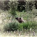 When Bears Dream by David Arment