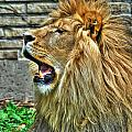 When He Speaks...they Listen...lazy Boy At The Buffalo Zoo by Michael Frank Jr