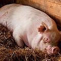 When Pigs Fly by Troy Corbett