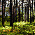 When The Forest Beckons by Karen Wiles