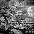 When The Moon Comes Over Da Mountain by Robert McCubbin