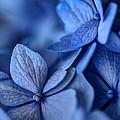 When You're Feeling Blue by Nikolyn McDonald