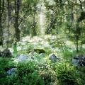 Where Fairies Dwell by Gun Legler