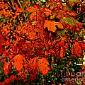 Where Has All The Red Gone - Autumn Leaves - Orange by Barbara Griffin