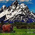Where The Buffalo Roam by Bob and Nadine Johnston