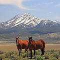 Where The Mustangs Roam by Gene Praag