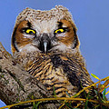 Where'd Ya Get Those Peepers by John Absher