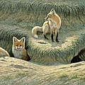 Where's Mom-fox Pups by Paul Krapf
