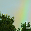 Where's My Pot Of Gold? by Lew Davis