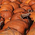 Which One Is The Great Pumpkin by Elvis Vaughn