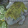 Whimsical Frog by Cathy Mahnke