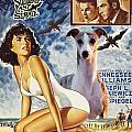 Whippet Art - Suddenly Last Summer Movie Poster by Sandra Sij
