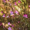 Whirling Butterfly Bush by Jane Luxton