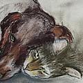 Whisker To Whisker by Cori Solomon