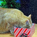 Whiskey's Present by Diana Angstadt