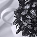 Whispered Beauty - Black And White Art by Jordan Blackstone