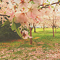 Whispering Cherry Blossoms by Alys Caviness-Gober