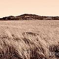 Whispering Fields by Mickey Harkins