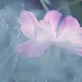 Whispering Wild Rose by Jenny Rainbow