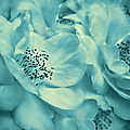 Whispers Of Teal Roses by Jennie Marie Schell