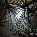Whispy Winter Moonlight by Maria Urso